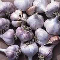 New_bogatyr_garlic