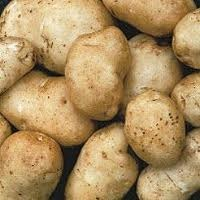 Kennebec_potato_image